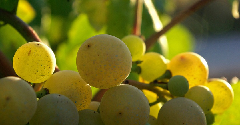 Xarel.lo grape used in Cava | © batega / WikiCommons