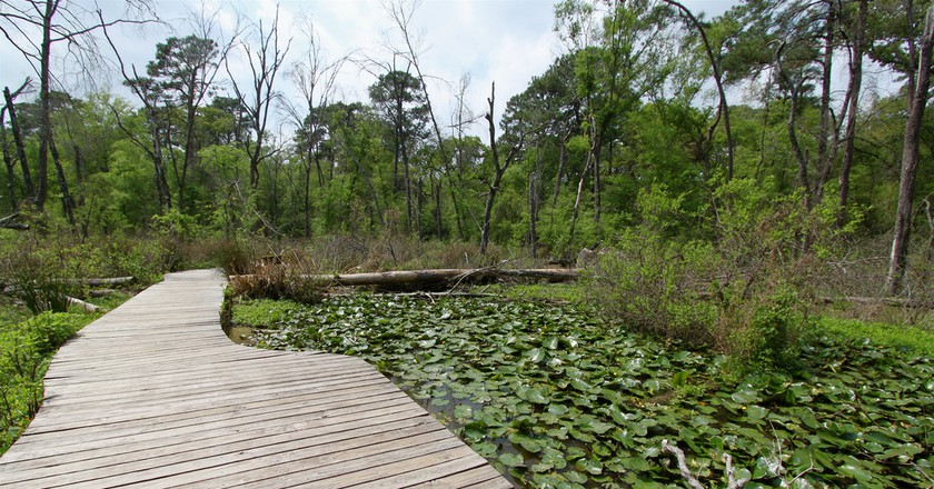 Houston Arboretum   © Roy Luck/Flickr