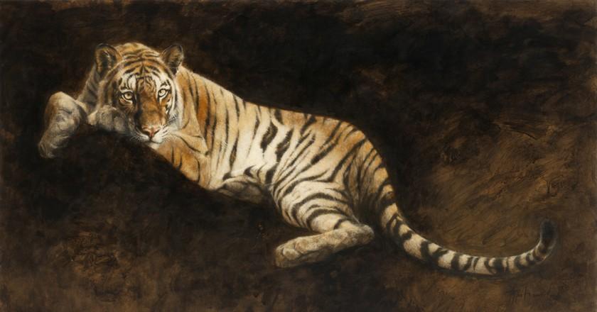 Young Bengal Tiger | © Atsushi Harada
