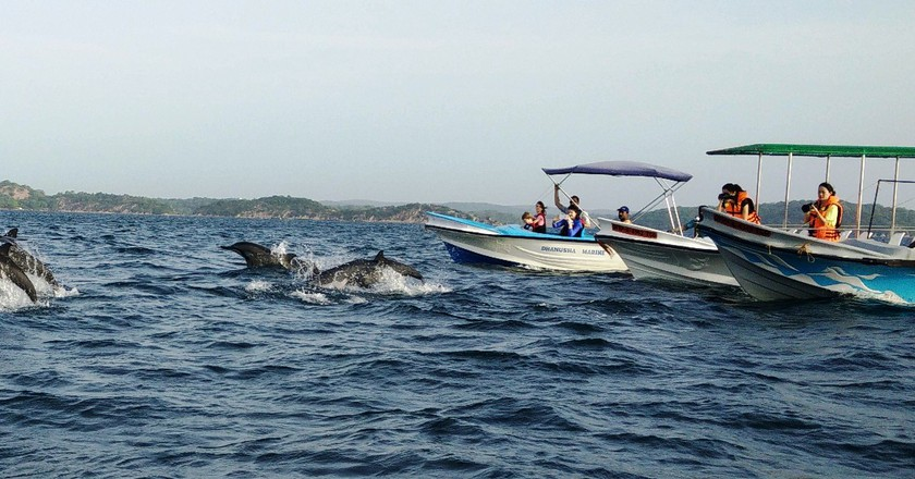 Dolphin watching in Trincomalee | © Nicole Figueiredo