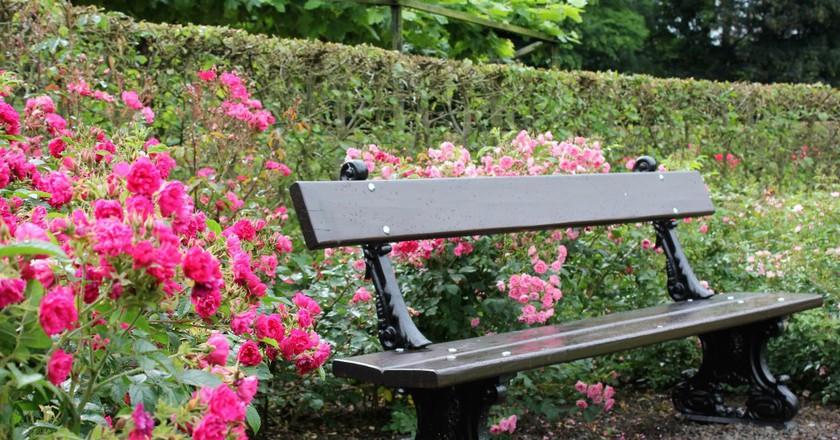 Coloma Park Rose Garden | Courtesy of Anne Boyle