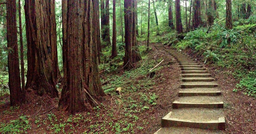 Muir Woods © Miguel Vieira/Flickr
