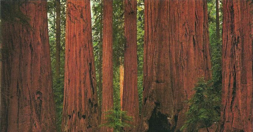 Sequoia National Park © Stephanie/Flickr
