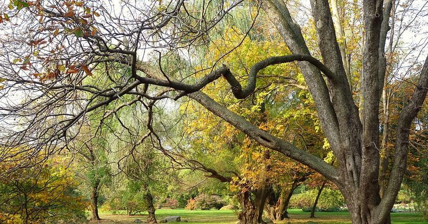 Autumn View Brooklyn Botanical Garden | © Daderot/WikiCommons