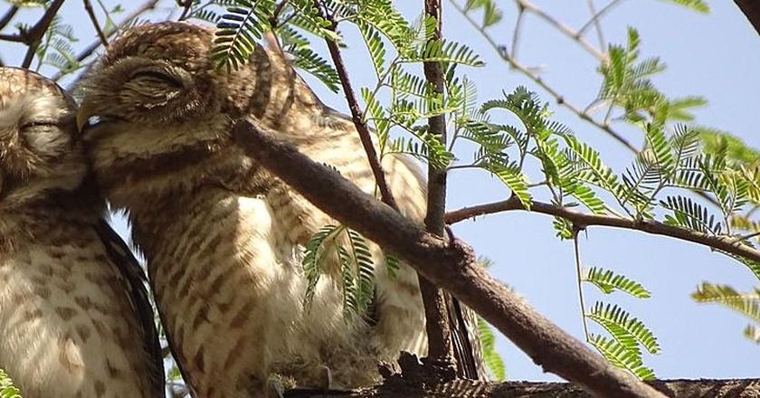 Keoladeo National Park (Bharatpur Bird Sanctuary) | ©  Abhirup26/WikiCommons