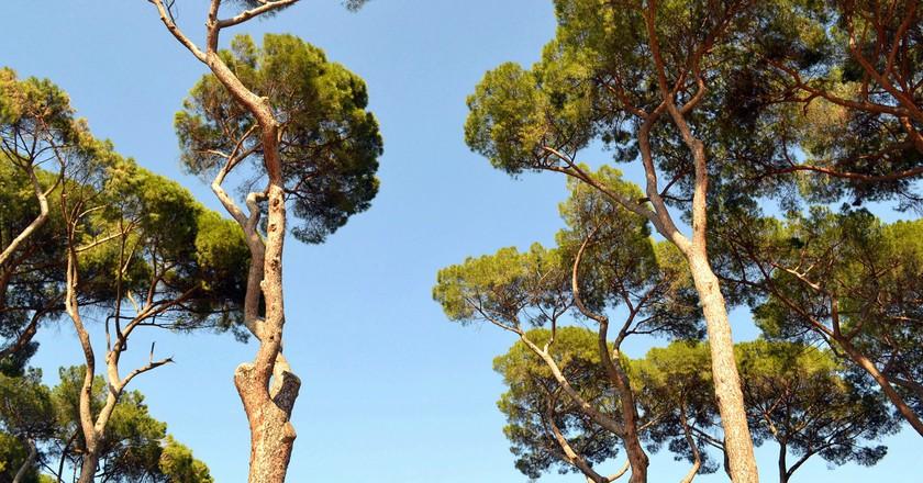 Villa Borghese   © Livia Hengel