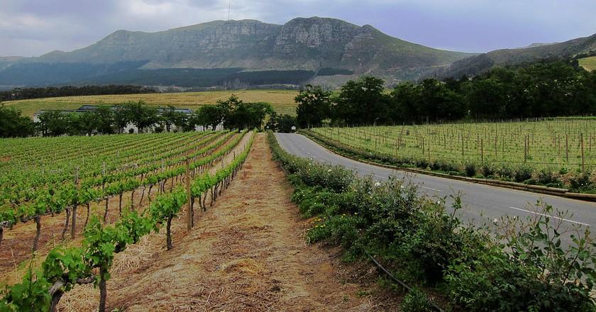 Constantia wine estate © fabulousfabs/WikiCommons