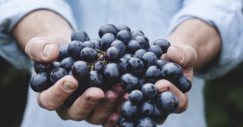 Blueberries | © unsplash.com/Pexels