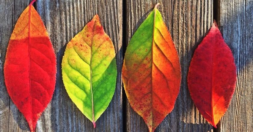 © pixabay.com/Pexels