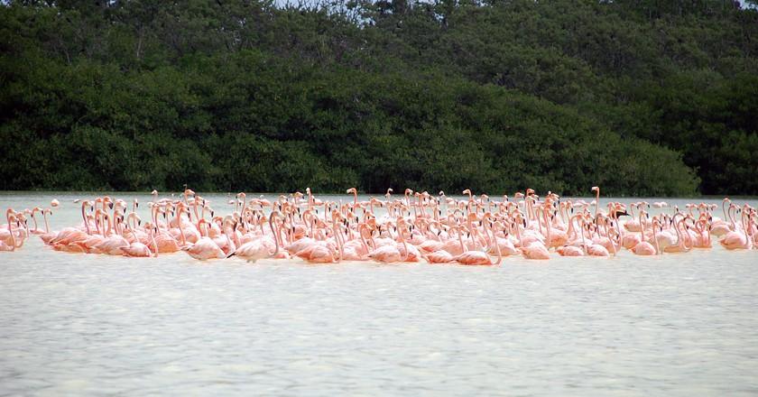 Flamingos in Yucatán | © Peyri Herrera/Flickr
