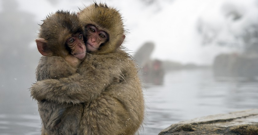 Snow monkeys | © SITS Girls/Flickr