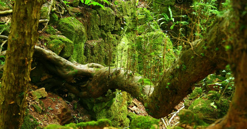 Puzzlewood|©Neil Barnwell/Flickr