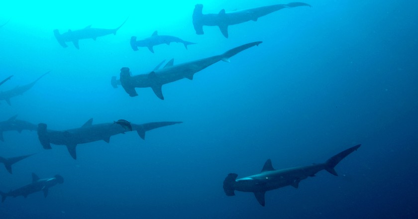 Sharks!  © Ryan Espanto/Flickr