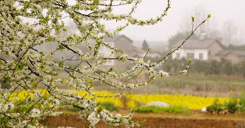 Spring in China Village ©Jun Kok/Flickr