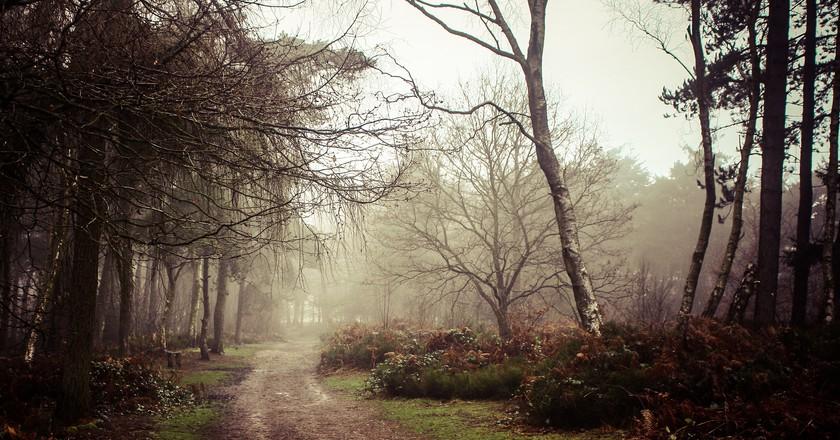 Lickey Hills walking trail | © Adam Hinett/Flickr