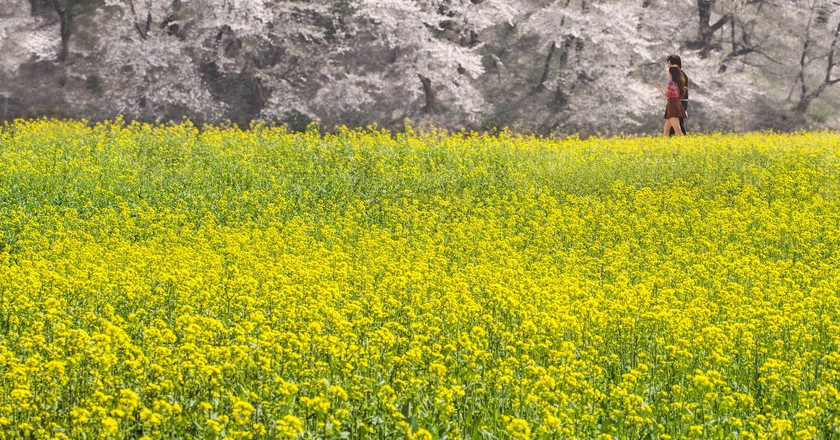 Spring in Gyeongju | © Brandon Oh / Flickr