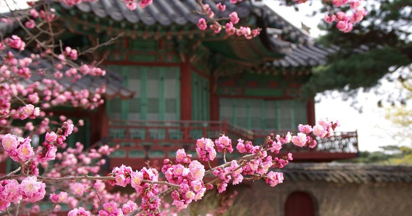Changdeokgung Secret Garden  | © mill56 / Flickr