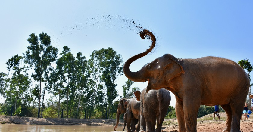 An elephant playing in water | Courtesy of Wildlife Friends Foundation Thailand
