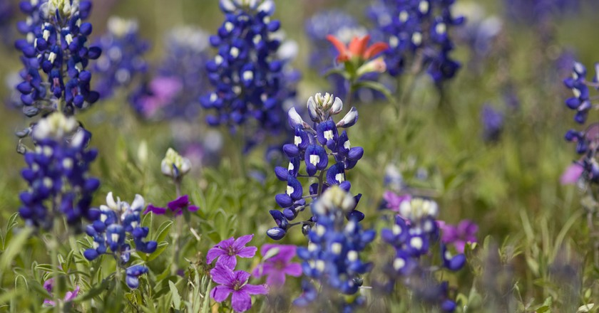 The Best Spots To See Bluebonnets In Texas This Spring