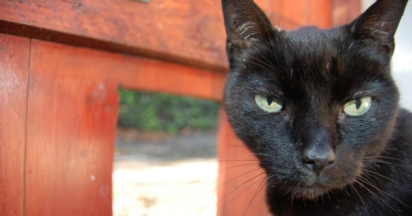 Pissed off cat/tiny door ©  Rachel Docherty/Flickr