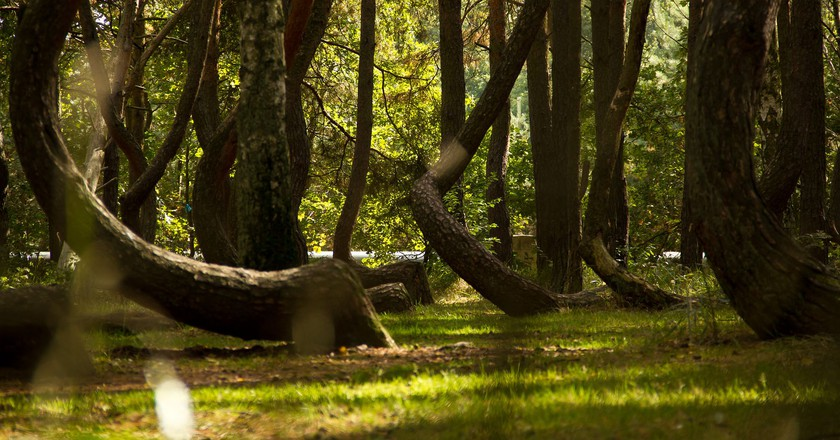 Crooked Forest | © Kengi / Wikipedia Commons