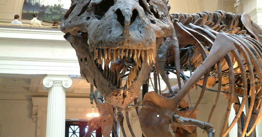 T-Rex almost comes to life at the museum | © James St. John / Flickr