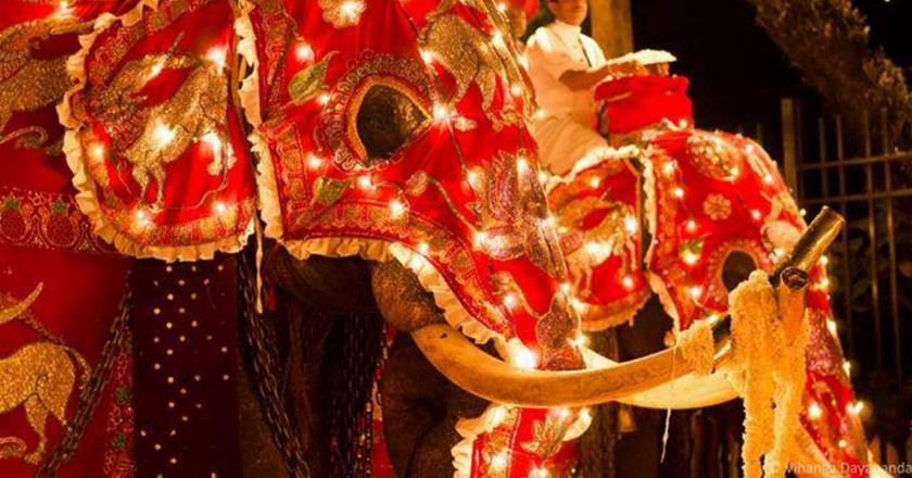 Elephants elegantly garbed for the procession at the Kandy Esala Perahera. |© Amila Tennakoon / Flickr