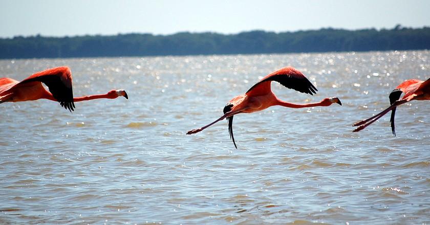 Celestún's famous flamingos   © Mindaugas Danys/Flickr
