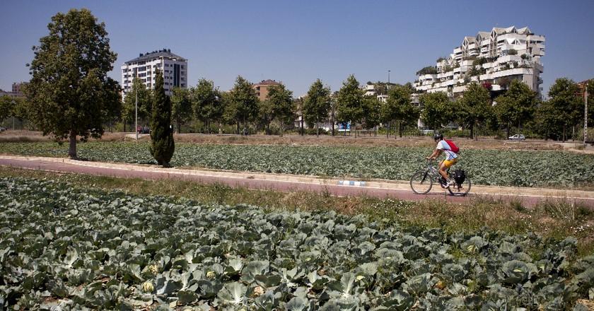 Cycling through the agricultural gardens around Valencia   Photo courtesy of Valencia Tourism