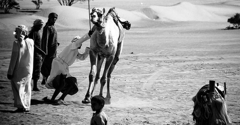 Camel Play in the Omani Desert | ©  Marc Veraart / Flickr