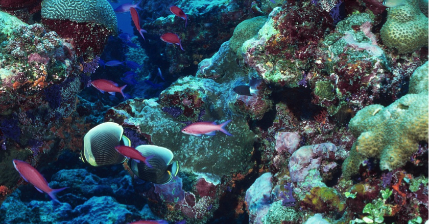 Marine life thrives in the Andros Coral Reef   Pixabay