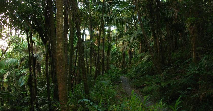 Trail in El Yunque | © Mihir Samel/Flickr