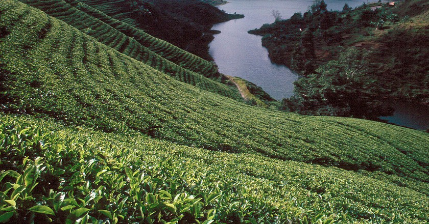 Sri Lanka tea plantations | ©  Wolfgangbeyer /WikiCommons