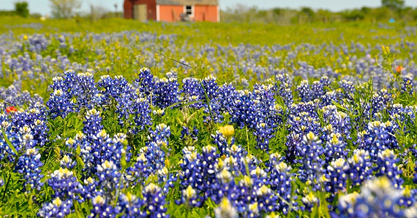 Texas Wildflowers   ©  faungg's photos / Flickr