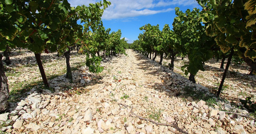 Provence is home to literally hundreds of vineyards, each one as breathtaking at the last | © Matt Lewis/Flickr