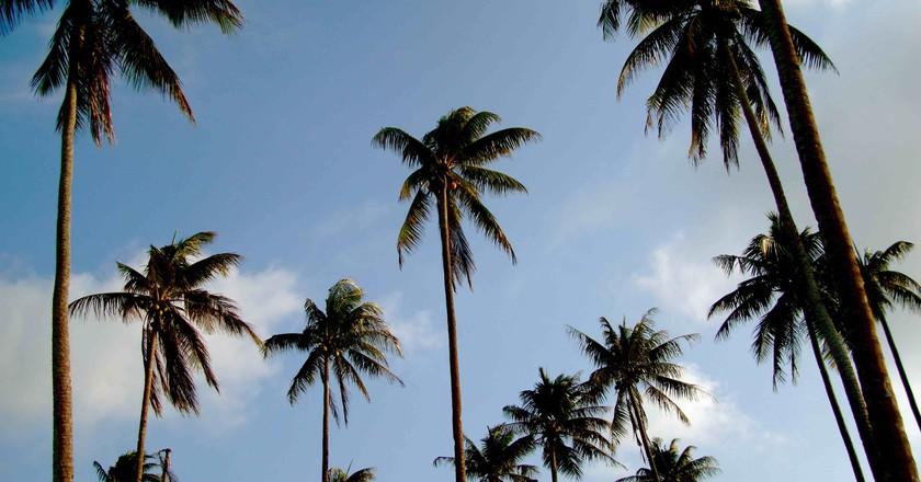 Trikora Coast © Adamina / Flickr