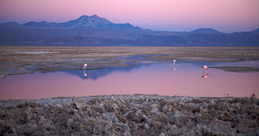 Salar de Atacama © Nicolas de Camaret
