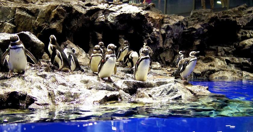 Penguins at the Sumida Aquarium | © Jun OHWADA/Flickr