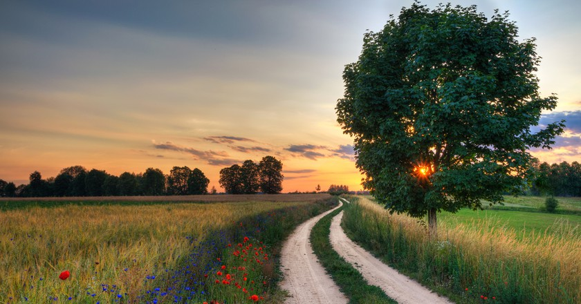 Summer landscape with country road and fields of wheat. Masuria, Poland   © ysuel/Shutterstock
