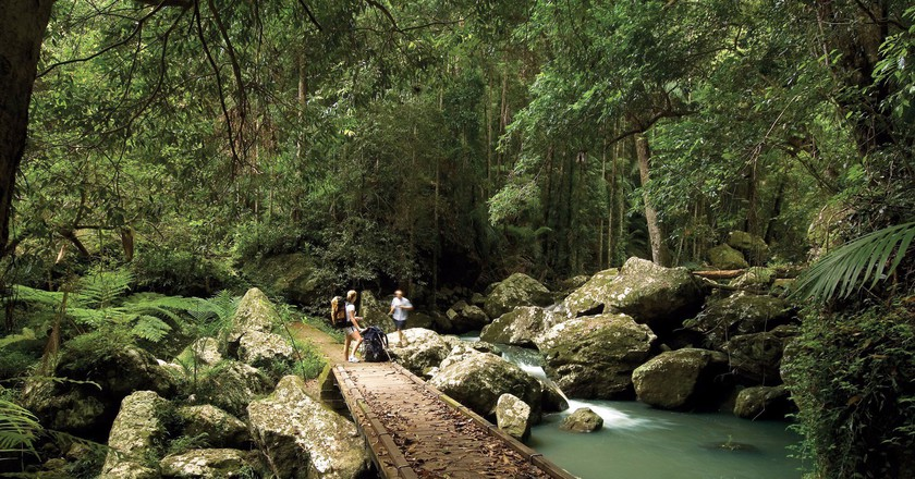 Kondalilla National Park | © Tourism Queensland