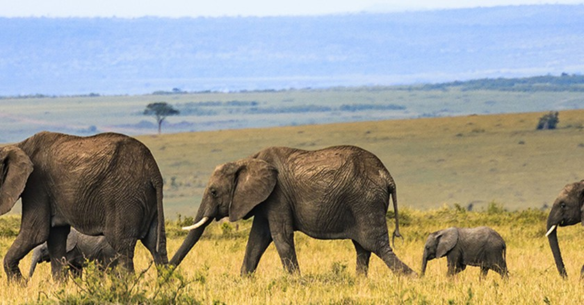 10 Things You Need To Know About Kenyas Iconic Elephants