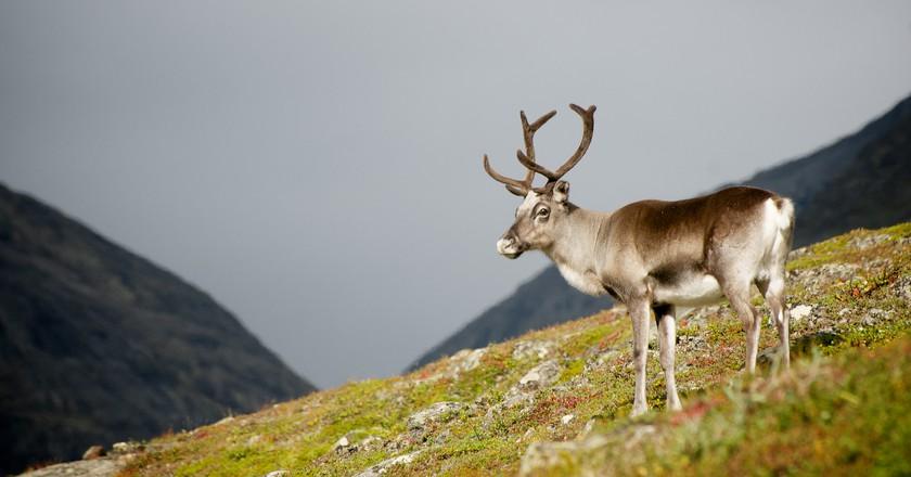 The King's Trail - Scandinavian Mountain Range   ©dilettantiquity / Flickr