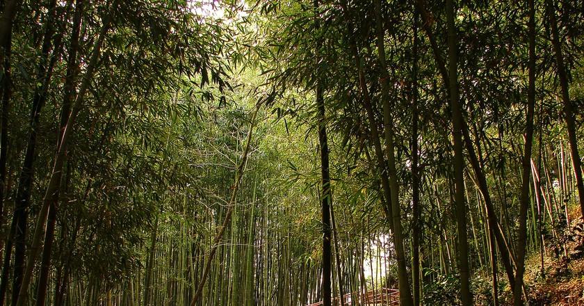 Damyang's Juknokwon (Bamboo Garden)   © Yeongcheol Lee / Flickr