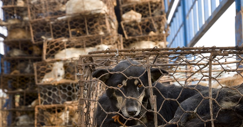 Dogs in cages   © Animals Asia / Flickr