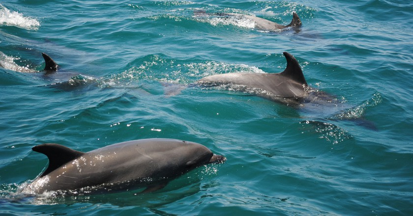 "<a href=""https://www.flickr.com/photos/deidrew/4651527880"" target=""_blank"" rel=""noopener noreferrer"">Go on a dolphin chase | © Deidre Woollard / Flickr</a>"