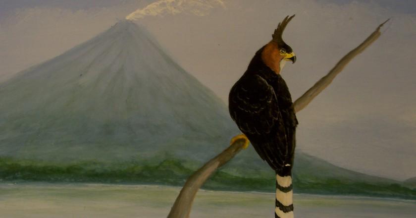 Ornate eagle | © Carol Patterson/Flickr