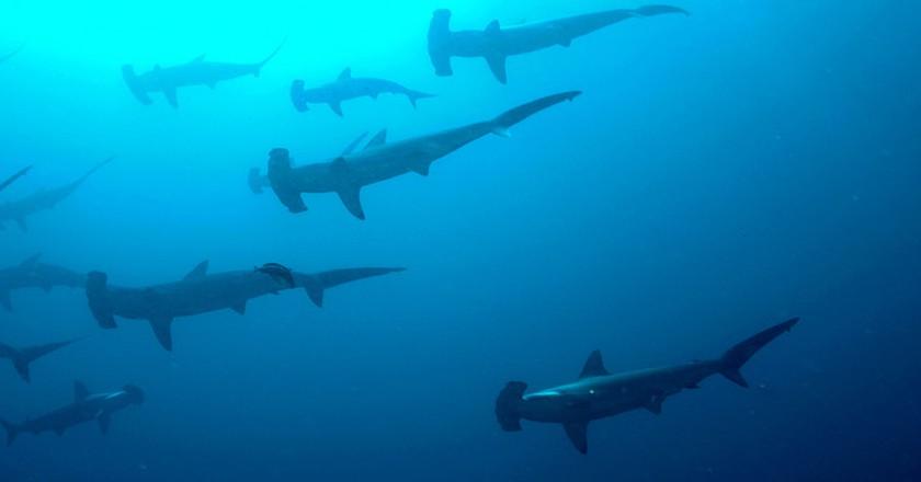 Guardians of the sea   © Ryan Espanto/Flickr