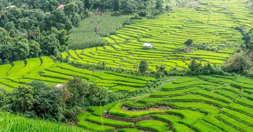 Rice Terraces | © Courtesy of hereisthailand/Pixabay