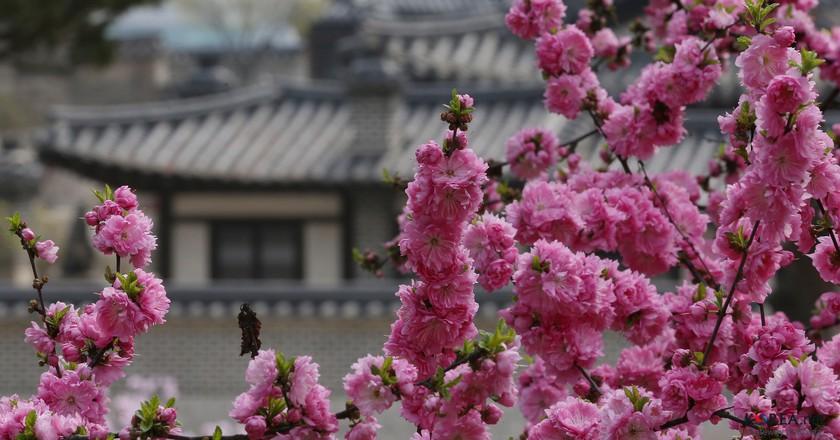 Changdeokgung Palace, Seoul | © KoreaNet / Flickr