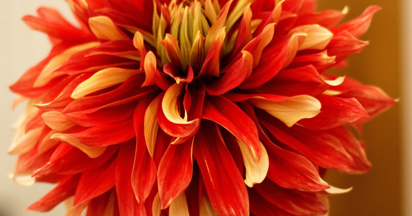 Mexicos incredible trees plants and flowers and where to find them dahlia dick thompsonflickr mightylinksfo